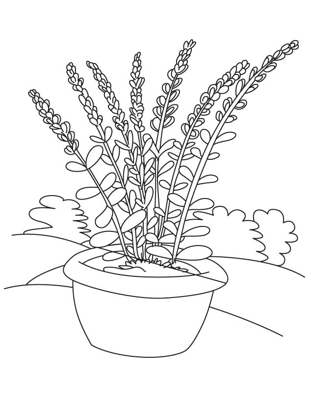 Lavender Flower Pot Coloring Page
