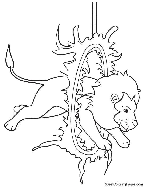 Lion jumping through fire hoop