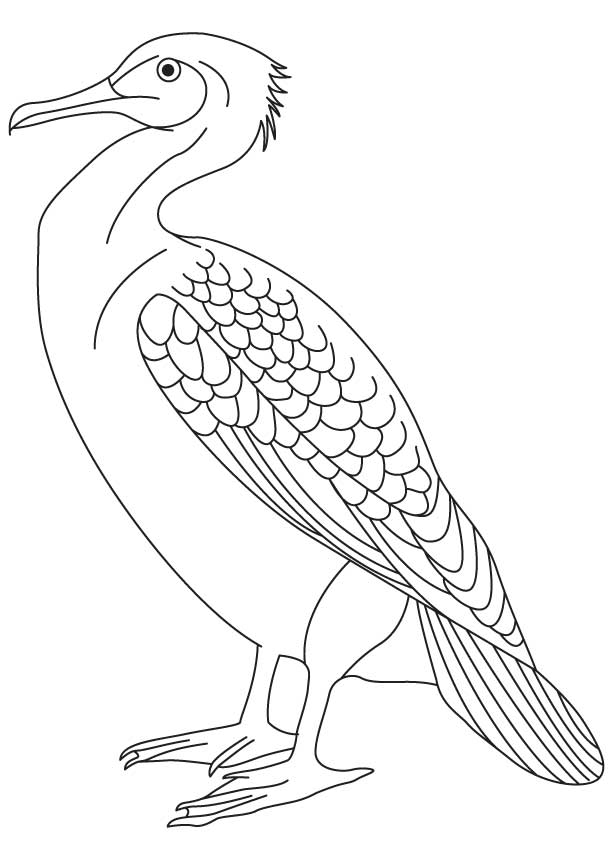 Little pied cormorant coloring page