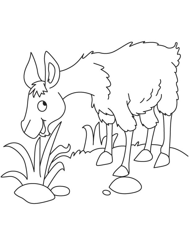 Llama Eating Grass Coloring Page