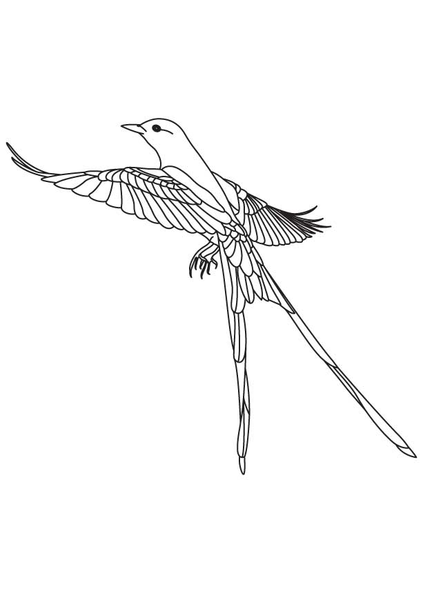 Long Tailed Flycatcher Coloring Page