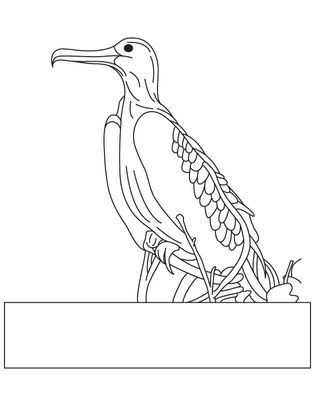Magnificent frigatebird coloring page