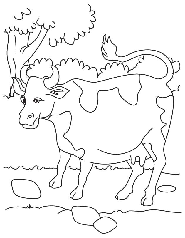 Free Cow Parts Coloring Pages