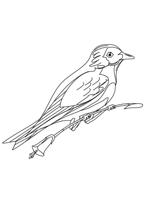 Mountain bluebird coloring page