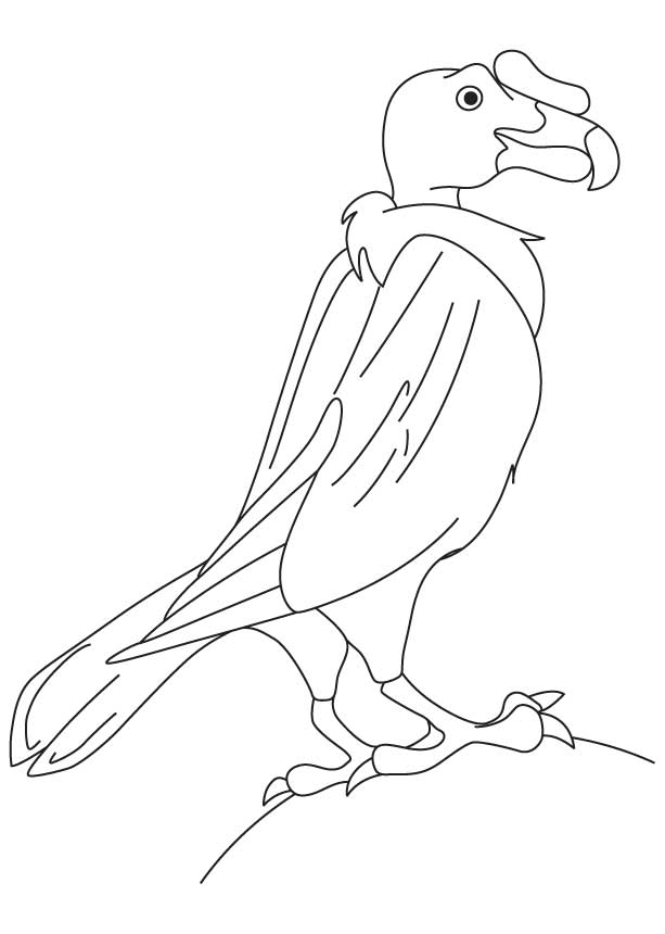 New World Vulture Coloring Page