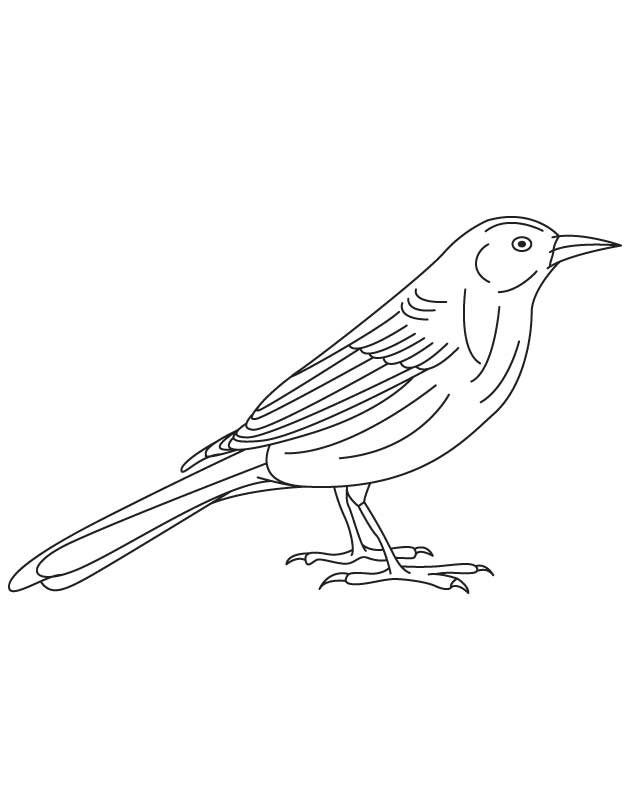 North America Bird Coloring Page
