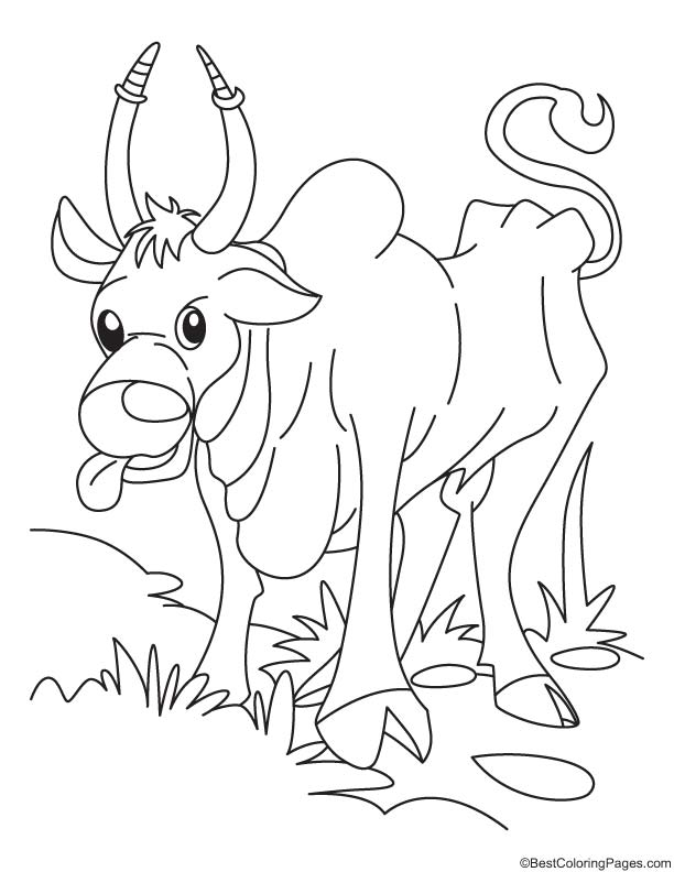 Ox searching for corn coloring page