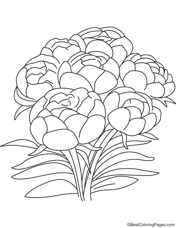 peony flowers coloring page download free peony flowers coloring