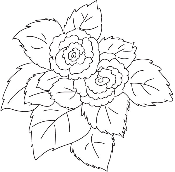 Fuchsia Coloring Page For Kids: Pink Flower Begonia Coloring Page