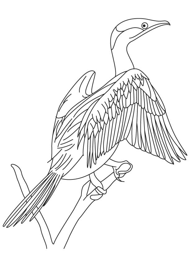 red legged cormorant coloring page