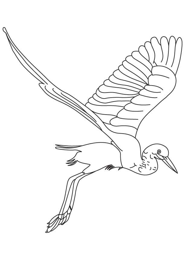 Reddish egret coloring page