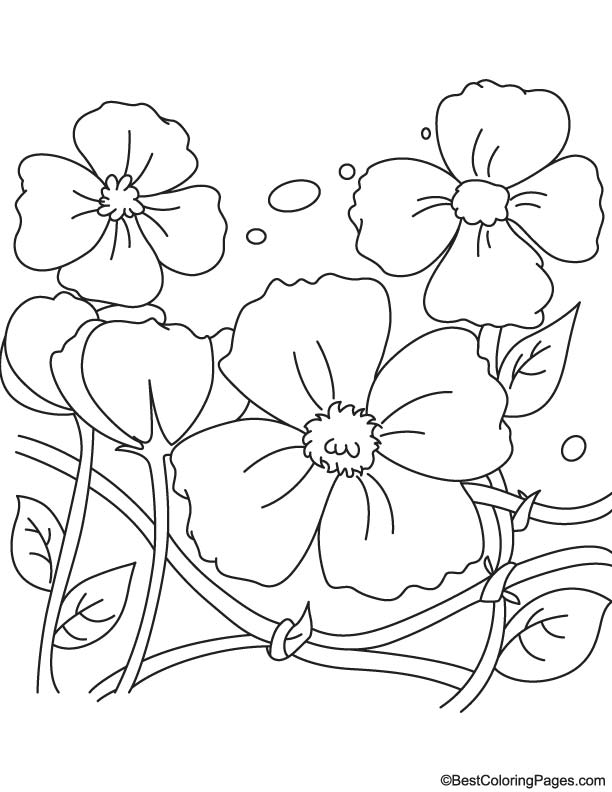 Remembrance Day Poppies Coloring Page Download Free Remembrance Day Poppies Coloring Page For Kids Best Coloring Pages
