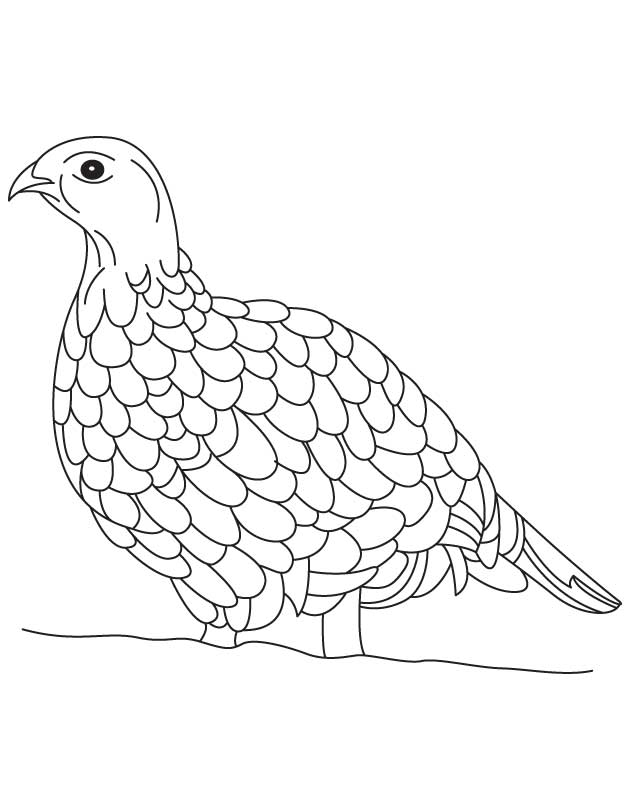 Ruffed grouse coloring page Download Free Ruffed grouse coloring