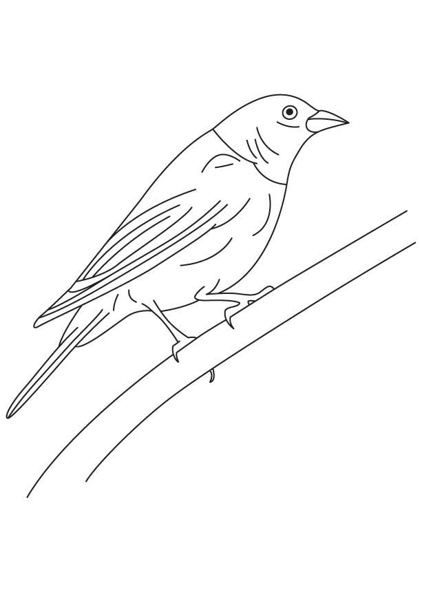 Shiny cowbird coloring page
