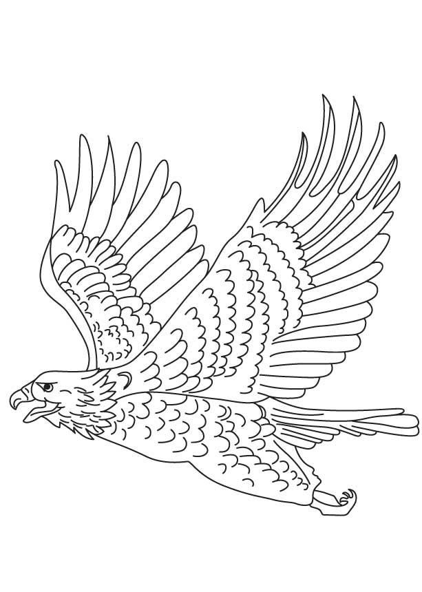 Short Toed Snake Eagle Coloring Page Download Free Short