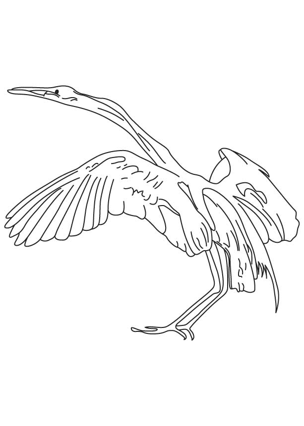 Snowy egret coloring page