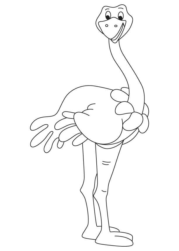 Somali ostrich coloring page Download Free Somali ostrich