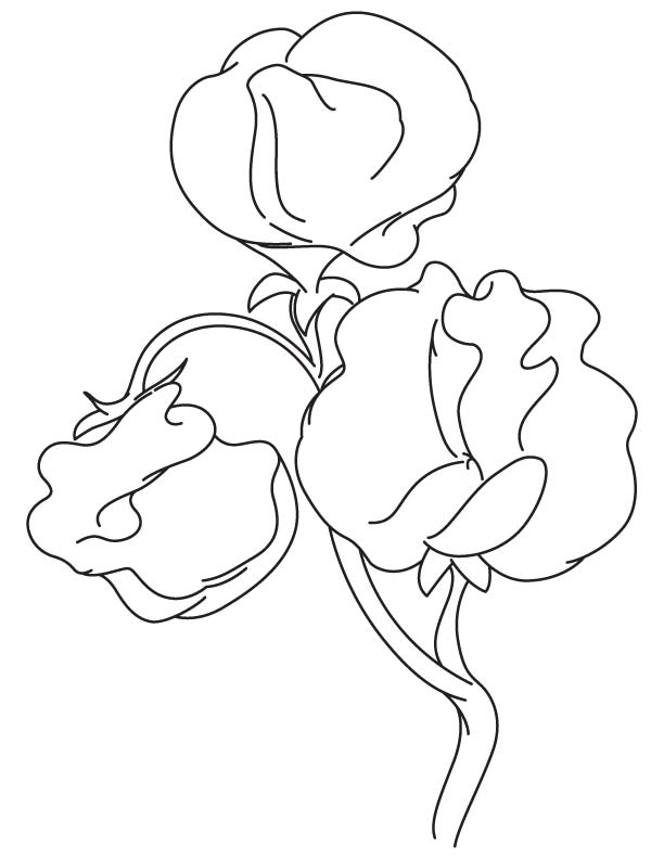 Sweet pea flowering plant coloring page download free for Sweet pea coloring pages