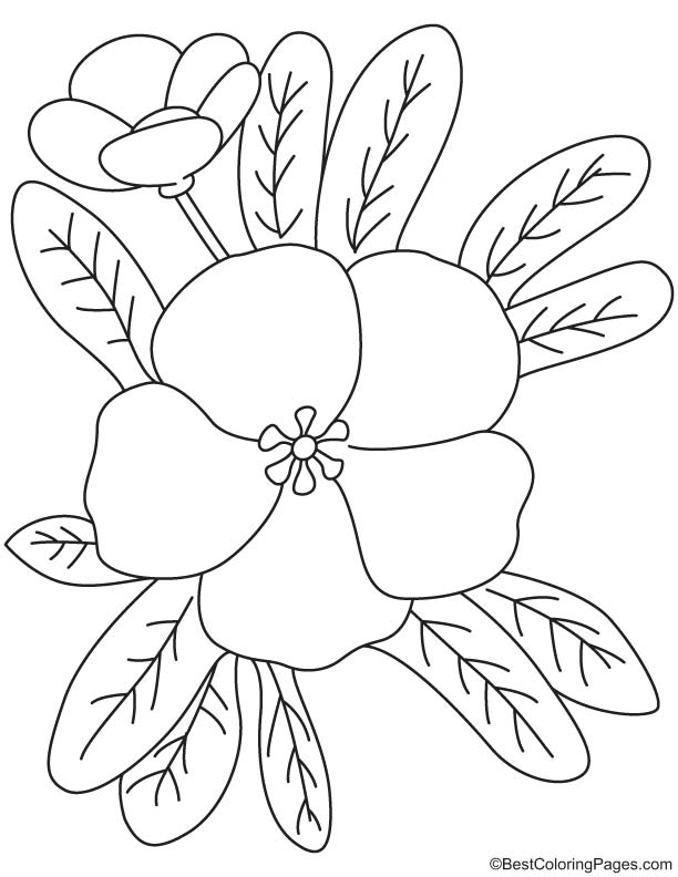 Free primrose coloring pages