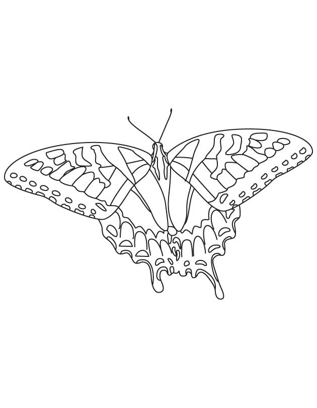 swallowtail butterfly coloring book pages - photo#15