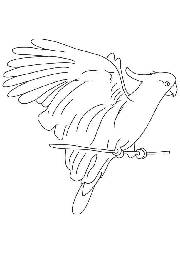 Tubers eating cockatoo coloring page
