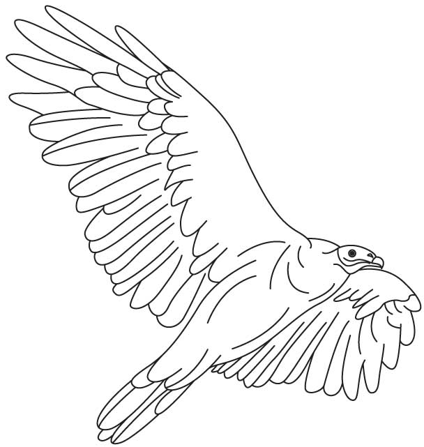 Vulture Fly High Coloring Page Download Free Vulture Fly