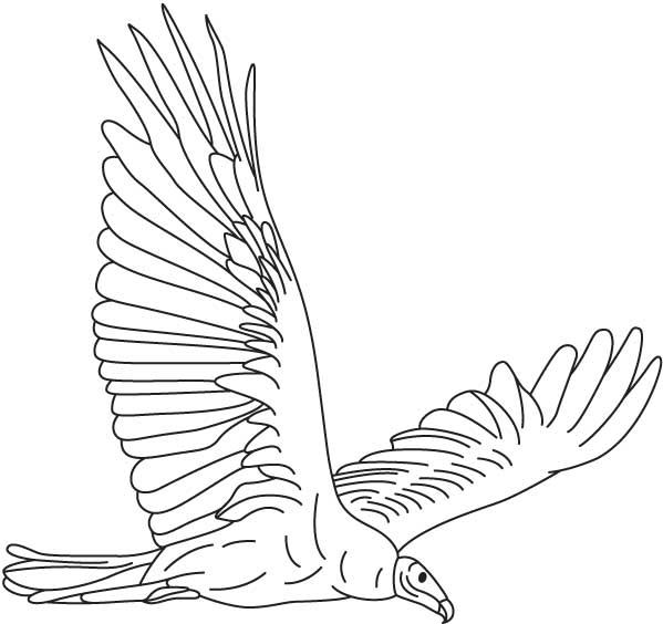 Vulture Line Drawing Vulture soaring colori...
