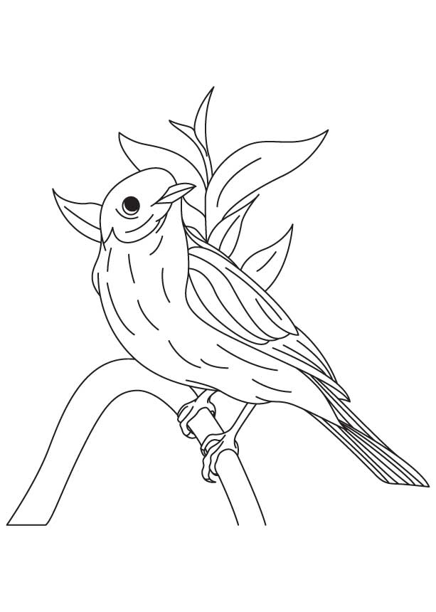 Western Bluebird Coloring Page Blue Bird Coloring Pages