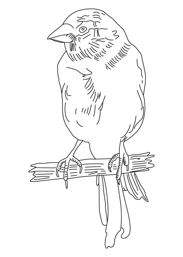 Yellow canary coloring page