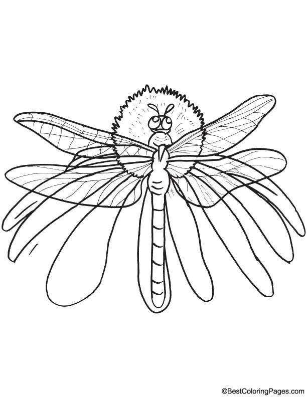 Yellow winged dragonfly coloring page