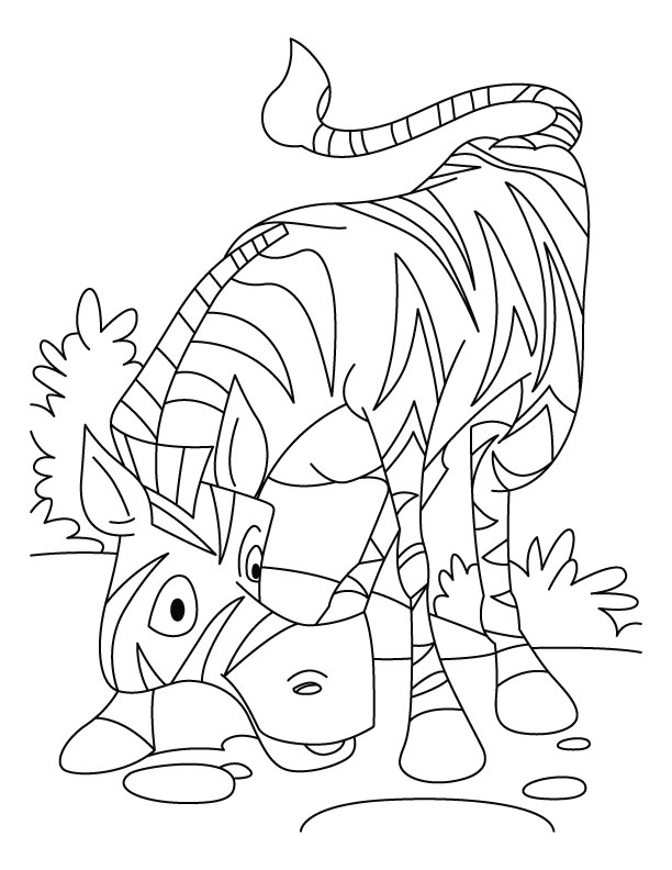 African zebra coloring pages  Download Free African zebra