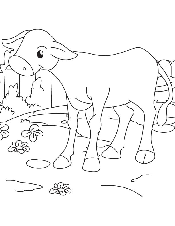 A baby calf coloring page