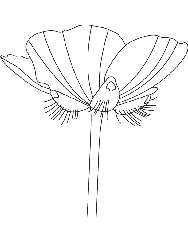 A buttercup flower coloring page download free a for Buttercup flower coloring pages