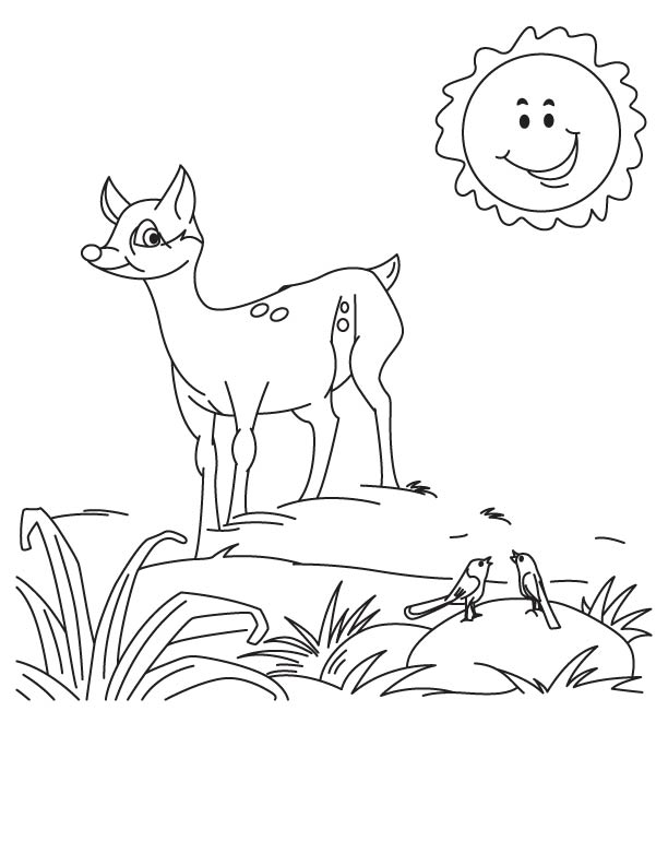 A deer fawn coloring page