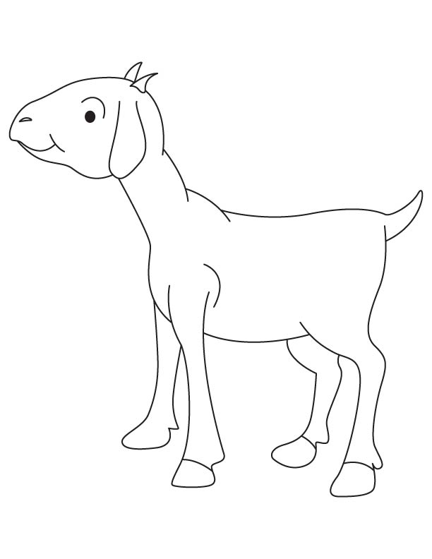 A goat billy coloring page