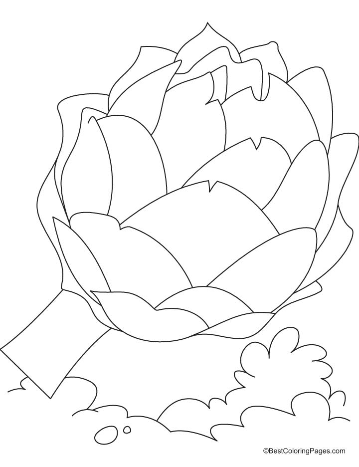 Fresh artichoke coloring pages