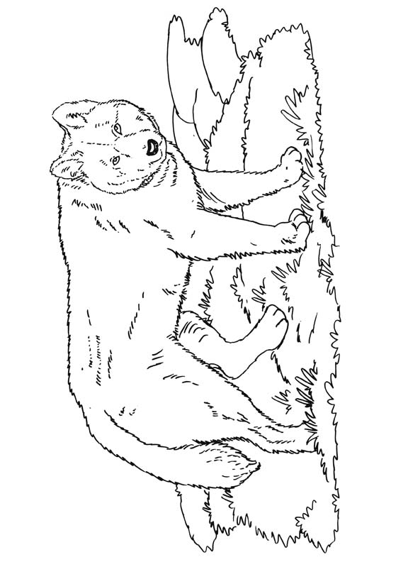 Dingo Animal Coloring Pages Wombat Page Holiday