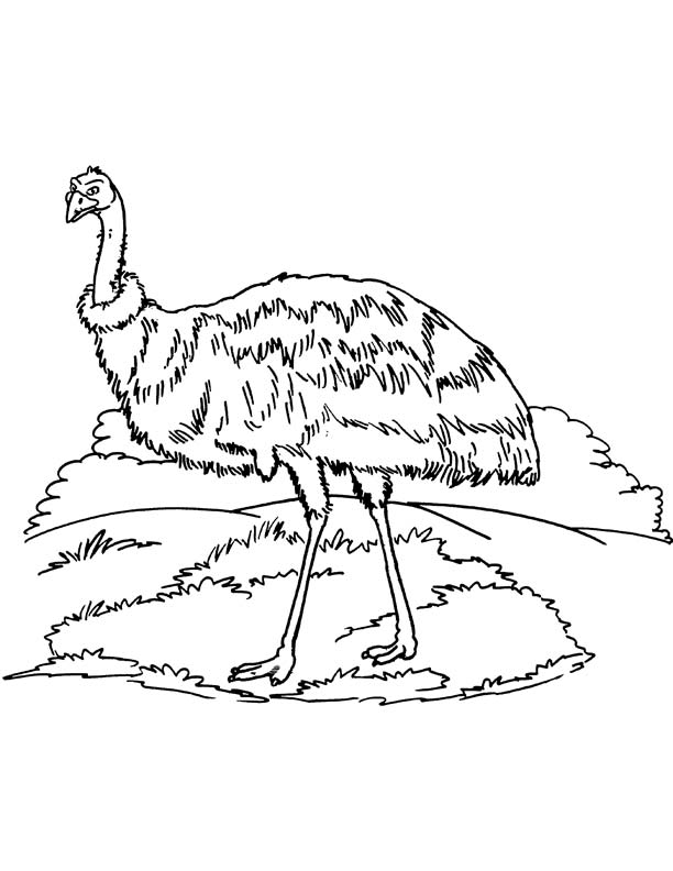Australian Emu coloring page