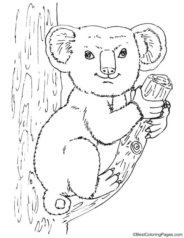 Australian koala coloring page