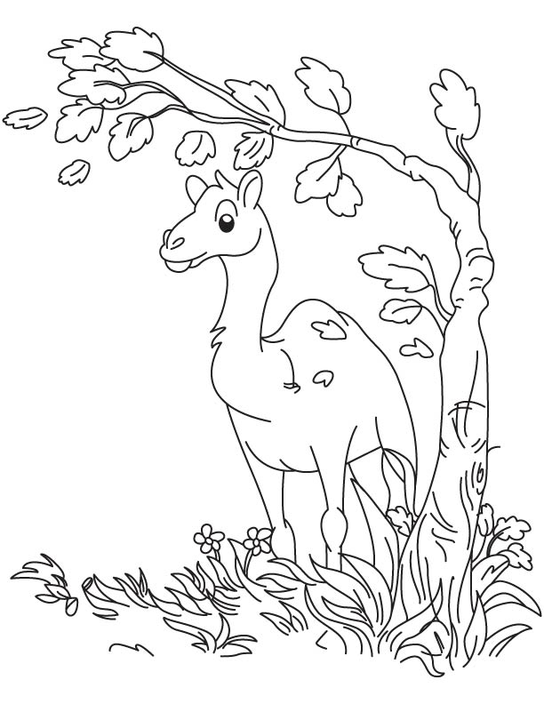 Baby camel thinking coloring page