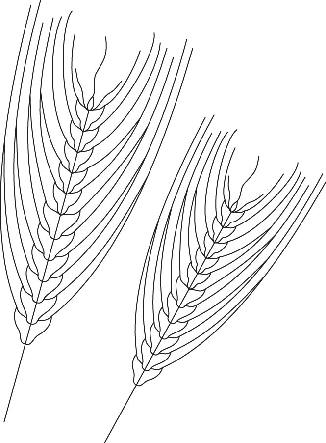 Barley coloring page Download