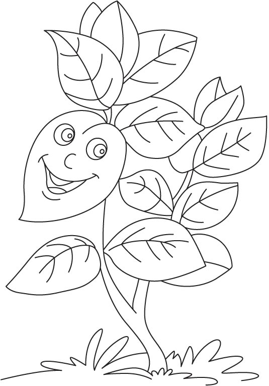 herbs coloring pages - photo#41