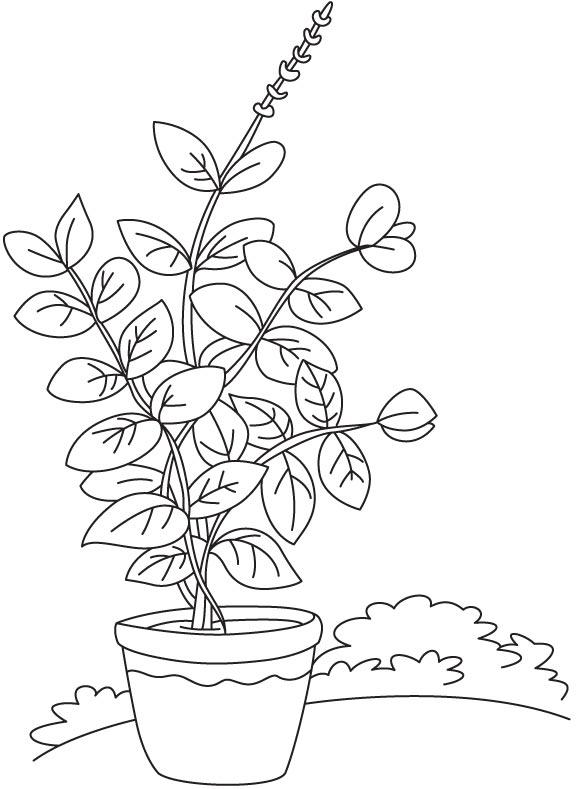 basil vase plant coloring page - Plant Coloring Pages