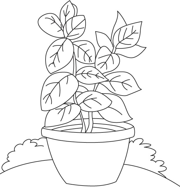 herbs coloring pages - photo#17