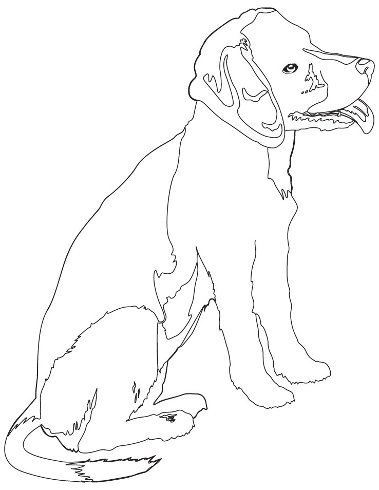 Realistic Puppy Coloring Pages Beagle Puppy Coloring Page