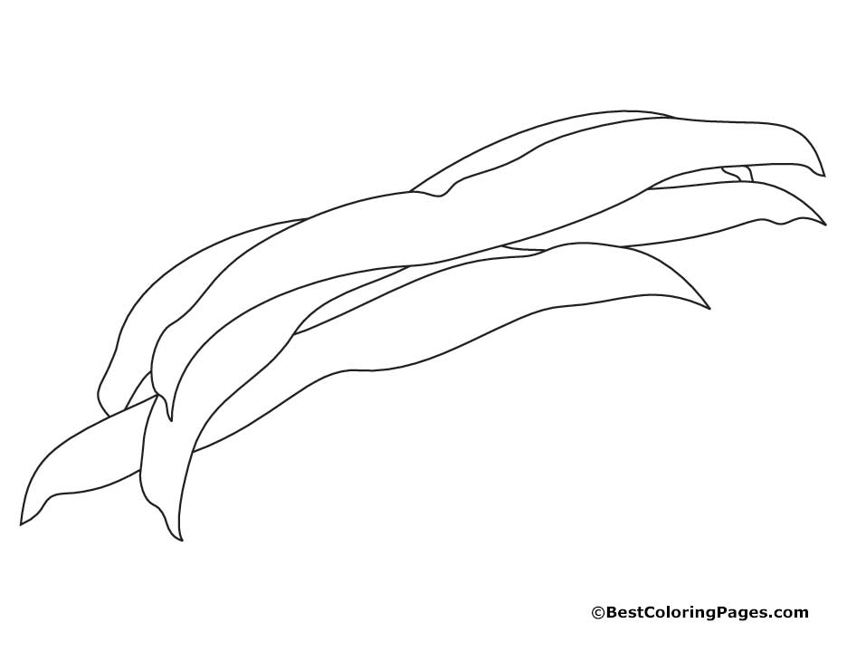 Beans coloring pages