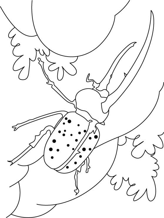 Beetle surviving on petal coloring pages