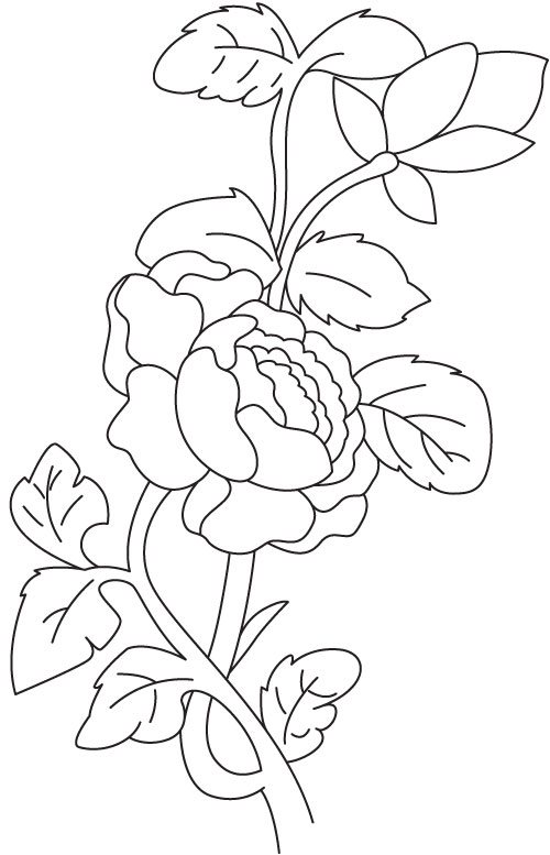 Begonia plant coloring page