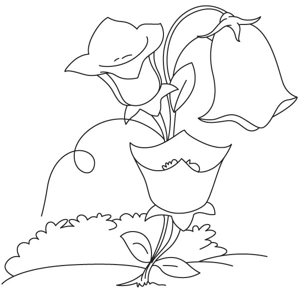 Bell shape flower coloring page