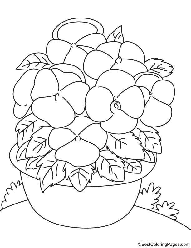 Bicolor pansy coloring page